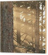 Firs On Fire Wood Print