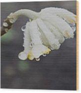First Blossom Wood Print