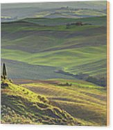 First Light In Tuscany Wood Print