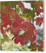 First Signs Of Fall  Wood Print