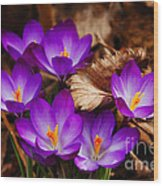 First Signs Of Spring Wood Print