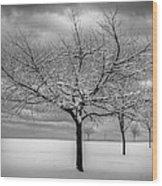 First Snow Wood Print