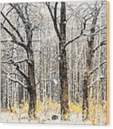 First Snow. Tree Brothers Wood Print