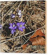 First Spring Flowers Wood Print