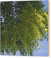 First Walnut Fruit 2014 Wood Print