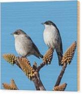 Fiscal Flycatcher Pair Wood Print
