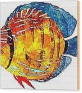 Fish 502-11-13 Marucii Wood Print