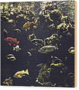 Fish Aquarium Wood Print