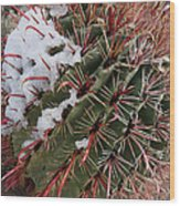 Fish Hook Barrel Cactus With Snow Wood Print by Susan  Degginger