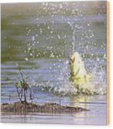 Fish-img-0717-004 Wood Print