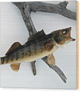 Fish Mount Set 02 A Wood Print