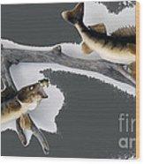 Fish Mount Set 06 B Wood Print