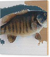 Fish Mount Set 10 Cc Wood Print