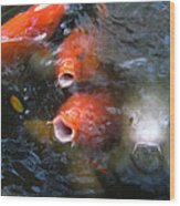 Fish Mouths 2 Wood Print