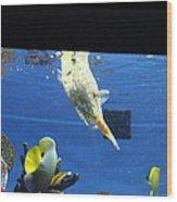 Fish - National Aquarium In Baltimore Md - 1212117 Wood Print