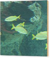 Fish - National Aquarium In Baltimore Md - 1212141 Wood Print by DC Photographer