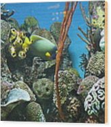 Fish - National Aquarium In Baltimore Md - 121232 Wood Print by DC Photographer