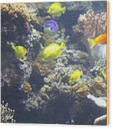 Fish - National Aquarium In Baltimore Md - 121246 Wood Print by DC Photographer