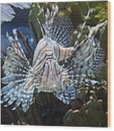 Fish - National Aquarium In Baltimore Md - 121266 Wood Print by DC Photographer