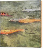 Fish - School Of Koi Wood Print by Susan Savad