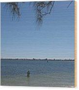 Fisher - Sanibel Island Wood Print