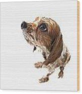 Fisheye Wet Archie Wood Print