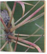 Fishhook Barrel Cactus Spines Wood Print