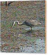 Fishing Blue Heron Wood Print