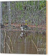 Fishing Feline Wood Print
