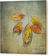Five Autumn Leaves Wood Print