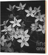 Five Petals Wood Print