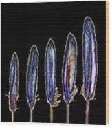 Five  Purple Feathers Wood Print