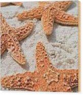 Five Starfish Wood Print