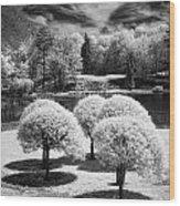 Five Trees Wood Print