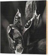 Flag Iris Seed Pod 3 Wood Print