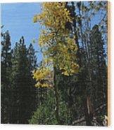 Flagstaff Aspens 786 Wood Print