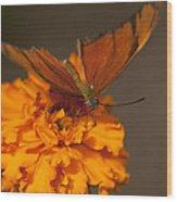 Flambeau Butterfly Wood Print
