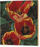 Flamboyance Wood Print
