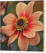 Flamboyant Dahlia. Wood Print