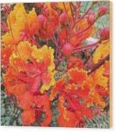Flamboyant Desert Flowers Wood Print