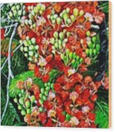 Flamboyant In Bloom Wood Print
