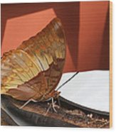 Flame-bordered Charaxes Butterfly #2 Wood Print
