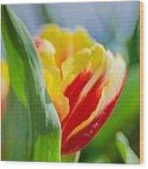 Flame Leaf Tulip Wood Print