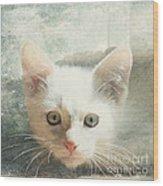 Flamepoint Siamese Kitten Wood Print
