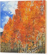 Flaming Aspens Wood Print