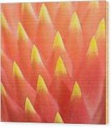 Flaming Bromeliad  Wood Print