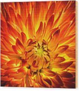 Flaming Dahlia - Paintography Wood Print
