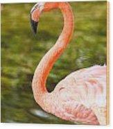 Flaming Flamingo Wood Print