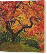 Flaming Maple Wood Print by Darren  White