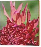 Flaming Petals Wood Print